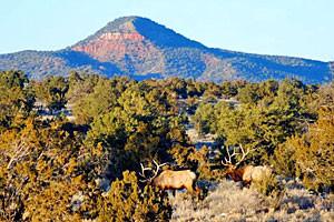 Arizona Vacation Rental Homes & Cabin